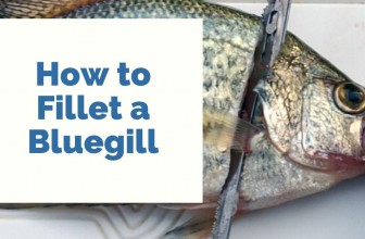How To Fillet A Bluegill